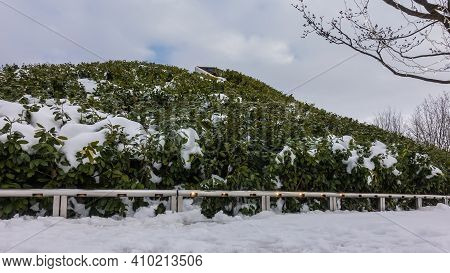 Winter Landscape In The Park. Against The Background Of A Cloudy Sky, A Hill With Evergreen Shrubs C