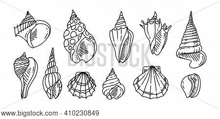 Doodle Set Of Sea Shell. Various Sea Shell In Outline. Hand Drawn. . Vector Illustration