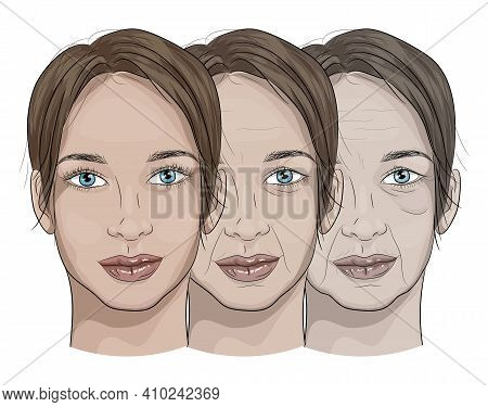 Illustration Of A Woman's Face In The Aging Process From Young To Old.aging Face, Wrinkles, Loss Of