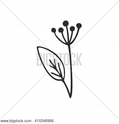 A Dill Branch Isolated On A White Background. Contour Vector Doodle Illustration Of A Flower And Lea