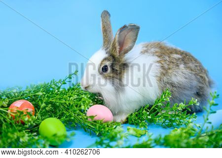 Rabbit On Blue Screen Background. Spirit Animal And Clever Pet For Easter