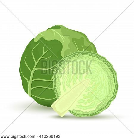 Green Cabbage And Half Cabbage Isolated On White Background. Vector Illustration. Ingredients For Co