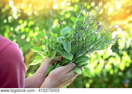 Organic Herb And Spice In Hand, Seasoning In Healthy Diet