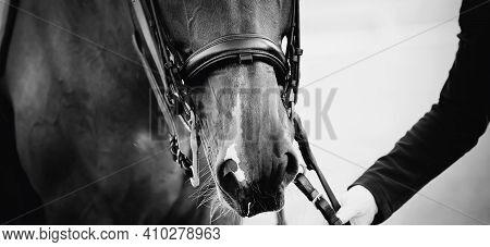 Portrait Sports Stallion  In The Double Bridle. Horse Muzzle Close Up. Dressage Of Horses. Equestria