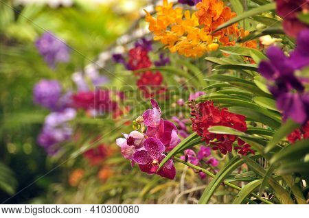 Multicolored Flowers With Green Leaves, View Of Bright Multicolored Flowers Growing In Wild Nature.