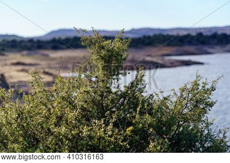 Green Plant Detail Close Up With Defocused Landscape And Lake Background.