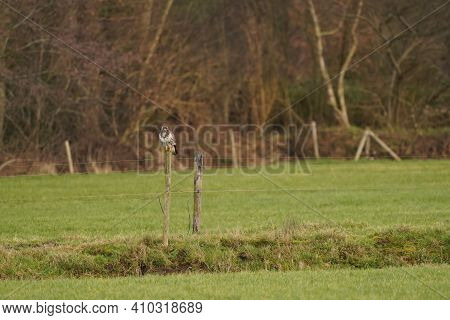 Large Buzzard Bird Of Prey Sits On A Pole At The Edge Of A Ditch In A Meadow And Hunts For Food. Maj