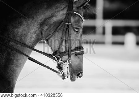 Portrait Sports Red Stallion In The Double Bridle. Dressage Of Horses. Equestrian Sport. Horseback R