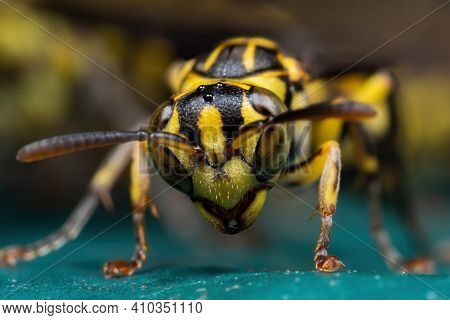 Macro Photography Of Wasp On Turquoise Floor