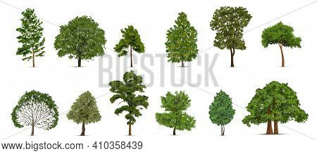 Realistic Tree Set With Isolated Images Of Single Green Trees Of Different Subvariety On Blank Backg