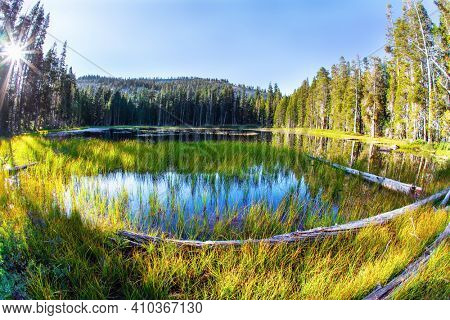 Quiet round grassy lake in a coniferous forest. Sunrise. Majestic coniferous forest are reflected in the smooth water. The Tioga Road and Pass in Yosemite Park. USA