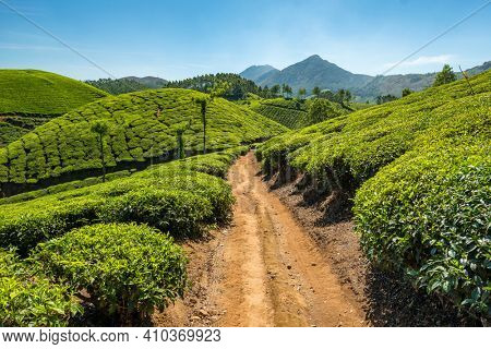 Narrow path through the amazing landscape of Munnar tea plantations in Kerala state, India