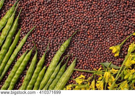 Stack Of Black Mustard Seeds With Mustard Pods And Flowers In Horizontal Orientation, Perfect For Ba