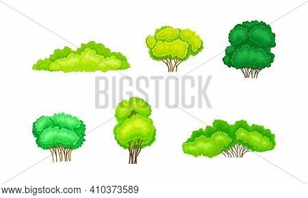 Green Bush Or Underwood With Branched Stem As Perennial Woody Plant Vector Set