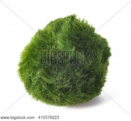 Moss Ball Isolated On A White Background