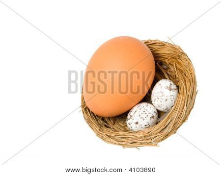 toy nest with pretend eggs and a real one poster