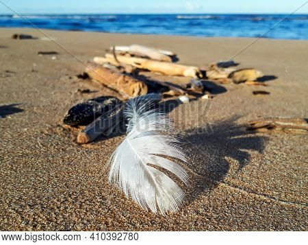 White Feather On The Beach Sand On Sea Coast