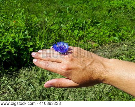 Young Female Hand Wearing A Small Blue Cornflower Flower As A Ring In Sunlight