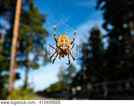 European Garden Spider, Cross Orb-weaver Hanging In The Web In Air With Forest And Blue Sky Backgrou