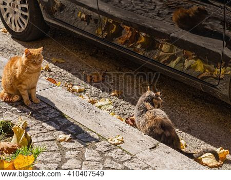 Image Of Cats On The Streets Of Orvinio In Italy