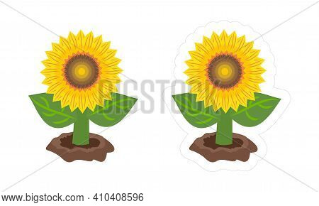 Sunflower Die Cut Vector Sticker. Cartoon Colorful Illustration Of Helianthus Plant Growing From The