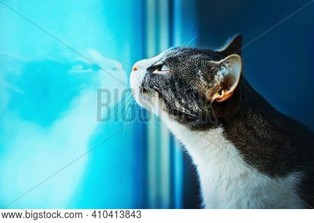 A Cute Domestic Tabby Cat Looks With Interest At The Window, Behind Which A Cold Winter Day, And The