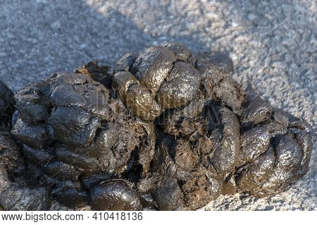 A Close Up View Of Fresh Horse Poo On The Tarred Main Road