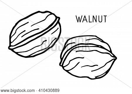 Walnut. Hand Drawn Vector Nut And Walnut Text. Doodle Outline Sketch. Organic, Fresh Cooking, Health