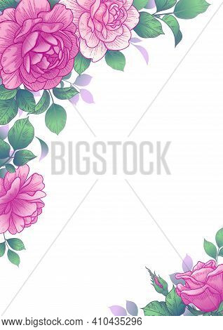 Elegant Border With Pink Rose Flowers And Green Leaves. Hand Drawn Roses On White Background. Vector