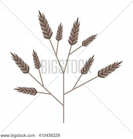 Simple Minimalistic Branch Of Cereal Grain Plant. Beige Stem With Inflorescences Spikelets. Nature C
