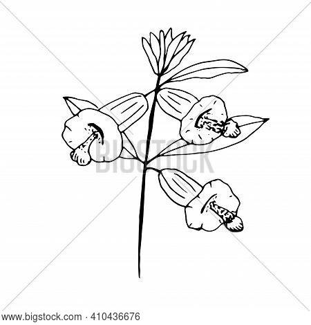 Sesame Flower Vector Illustration Clip Art Hand Drawing Sketch