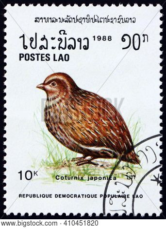 Laos - Circa 1988: A Stamp Printed In Laos Shows Japanese Quail, Coturnix Japonica, Is A Species Of