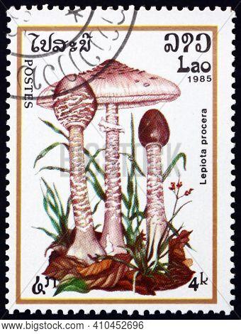 Laos - Circa 1985: A Stamp Printed In Laos Shows Parasol Mushroom, Macrolepiota Procera, Edible Mush