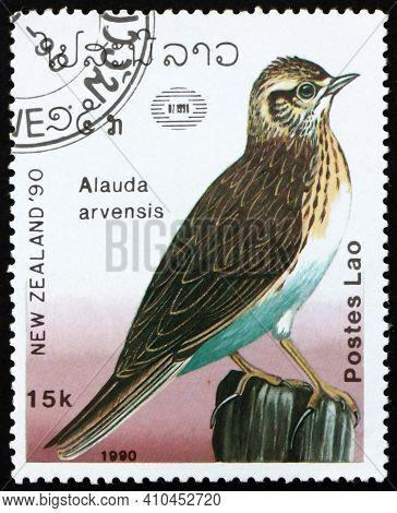 Laos - Circa 1990: A Stamp Printed In Laos Shows Eurasian Skylark, Alauda Arvensis, Is A Passerine B