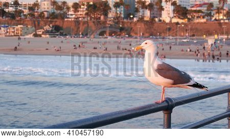 California Summertime Beach Aesthetic, Pink Sunset. Cute Funny Sea Gull On Pier Railing. Ocean Waves