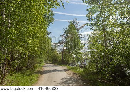 Road In Woods Among Trees On A Sunny Day