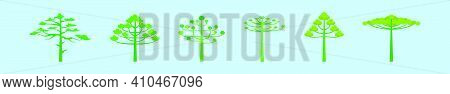 Set Of Araucaria Trees Cartoon Icon Design Template With Various Models. Modern Vector Illustration