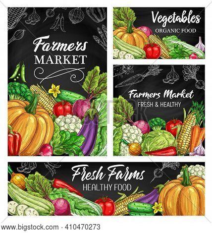 Vegetable Vector Sketches On Blackboard, Fresh Farm Food Design. Hand Drawn Veggies Of Garden Harves