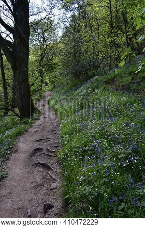 Blooming Wildflowers Along A Woodland Hiking Path.