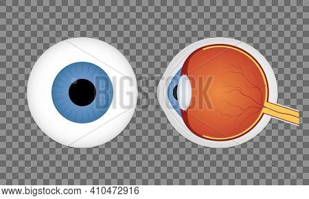 Realistic Human Eyeball On Transparent Background. Blue Pupil. Front And Side View Of Human Eye. Vec