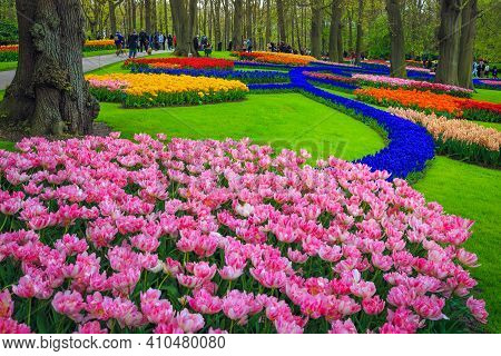 Lisse, Netherlands - May 01, 2017: Spectacular Flower Beds And Various Colorful Tulip Plantations In