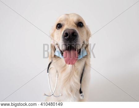 A Dog In A Medical Mask With A Stethoscope Sits On A White Background. Golden Retriever In A Doctor'