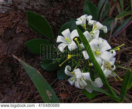 Flores Brancas Na Natureza E Cercadas De Vegetação