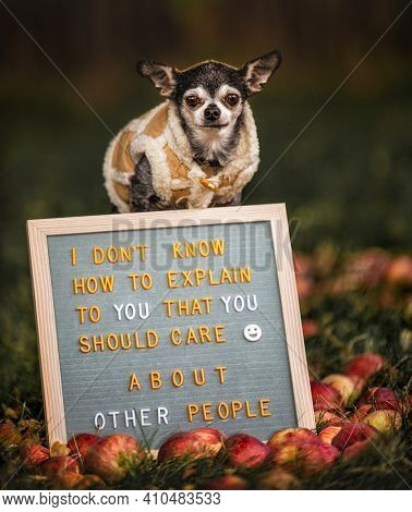cute chihuahua with a sign that reads I don't know how to explain to you that you should care about other people