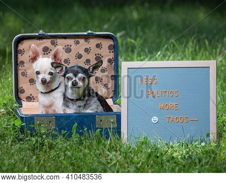 cute chihuahuas in a suitcase with a sign that reads less politics more tacos