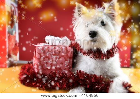 Puppy With Present And Snowflakes.