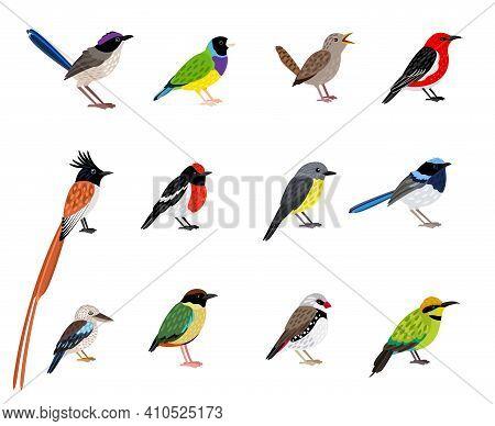 Beautiful Flying Bird Set. Cartoon Exotic Sky Characters With Cute Coloring Plumage, Vector Illustra