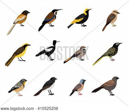 Birds With Beak And Plumage. Cartoon Beautiful Colored Characters Of Sky, Vector Illustration Set Of
