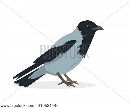 Crow Bird Icon. Sitting Or Standing Gray Crow Isolated On White Background. Vector Illustration.
