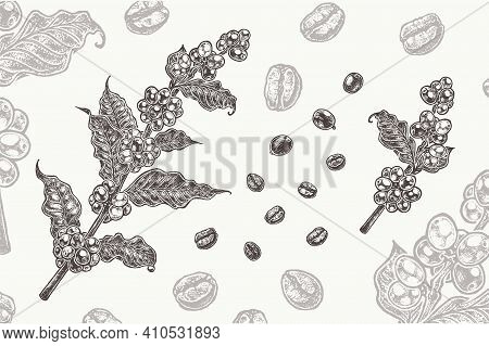 Coffee Branch With Grains And Coffee Beans. Vintage Style Organic Food Isolated On White Background.
